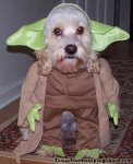 http://www.nobledreams.co.uk/uploads/thumbs/30_204-yoda_dog.jpg